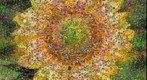 Photomosaic of a sunflower