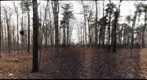 Dairy Bush GigaPan - 64 - Nov 17 2010