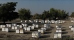 California Honey Bee Sampling 2010 Gigapan #4