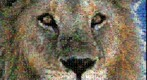 Photomosaic of a lion