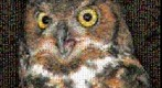Photomosaic portrait of a great horned owl