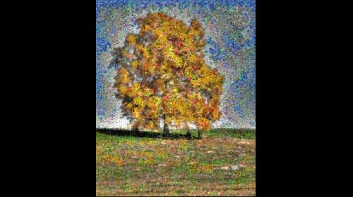 Photomosaic of a hickory tree in autumn foliage
