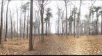 Dairy Bush GigaPan - 65 - Nov 26 2010