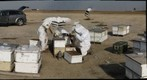 California Honey Bee Sampling 2010 Gigapan #6