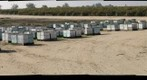 California Honey Bee Sampling 2010 Gigapan #9