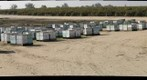 California Honey Bee Sampling 2010 Gigapan #10