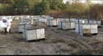 California Honey Bee Sampling 2010 Gigapan #17
