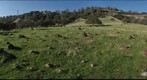 California Honey Bee Sampling 2010 Gigapan #20