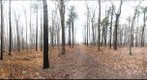 Dairy Bush GigaPan - 66 - Dec 01 2010
