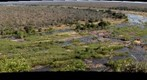 Probably the most wild animals on one gigapan image ever. Can you find the elephant? View from Elephant Rest Camp in the Kruger National Park, South Africa (KP SERIES NO5)