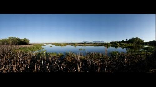 Monterrico mangrove swamp waterlily eco-system Guatemala's volcanos