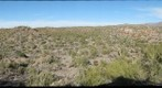 Horned Lizard Ranch 1