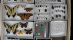 NCSU ENT 502 (Insect Systematics) Collection - Colin 1 