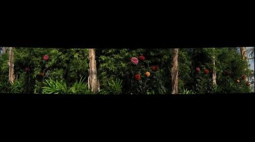 Arboretum Swath