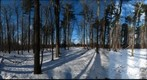Dairy Bush GigaPan - 71 - Jan 05 2011