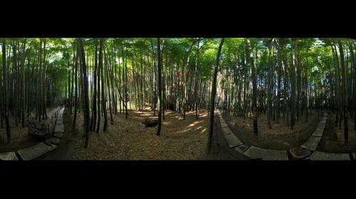 Bamboo Grove at Hokokuji Temple, Kamakura