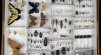 NCSU ENT 502 (Insect Systematics) Collection - Mary 1