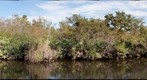 South Fork of the St. Lucie River
