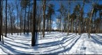 Dairy Bush GigaPan - 76 - Feb 03 2011