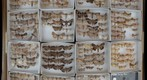 Noctuidae Receiving 20