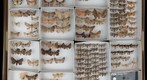 Noctuidae Receiving 11