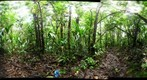 110203 - Inselberg Camp, Nouragues Field Station, French Guiana, Sampling on the Inselberg