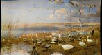 Bell Museum: Snow Geese