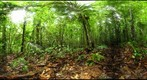 110205 - Inselberg Camp, Nouragues Field Station, French Guiana, Sampling on the RG trail near Pont Neuf