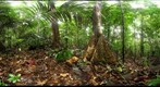 110207 - Inselberg Camp, Nouragues Field Station, French Guiana, Sampling on the Petit Plateau (I/XXIII)