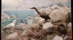 Bell Museum: Cormorant and Herring Gull