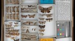 Noctuidae Receiving 25