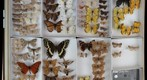 Lepidoptera Receiving 19