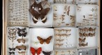 Lepidoptera Receiving 23