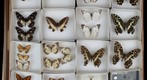 Lepidoptera Receiving 25