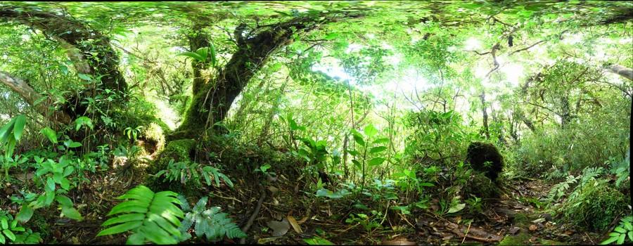 110225 - Costa Rica, Area de Conservacion (ACG), Volcan Cacao, Cima del Volcan