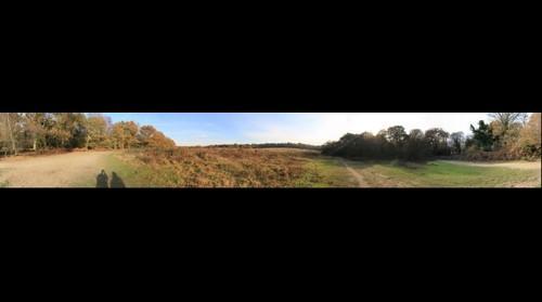 Fleet Pond Heathland
