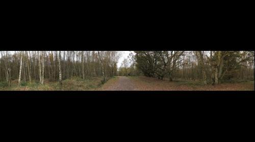 Southwood Woods