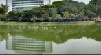 Varsity Lake, University of Malaya