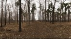 Dairy Bush GigaPan - 85 - April 13 2011