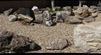 """Rocks of Virginia"" garden at the DGMR"