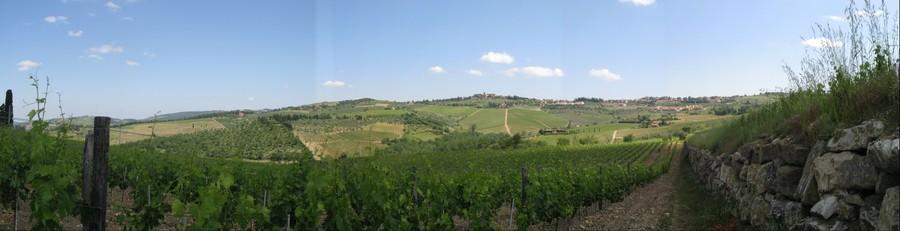 Vineyard near Panzano, Tuscany, Italy