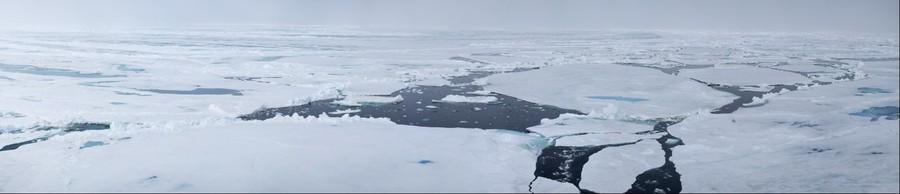 Polar Bears Crossing the Barents Sea