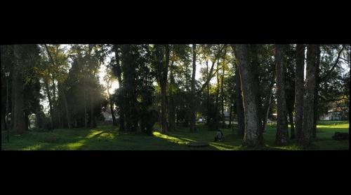 Bosque en Huachocopihue