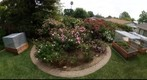 110506 Goleta, California, backyard garden rose circle and raised vegetable beds