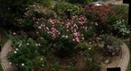 110506 Goleta, California -- Click and Smell the Roses