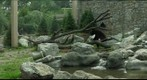 Stone Zoo Bear Habitat