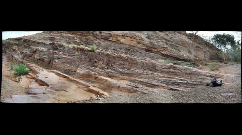 Trezona Formation Stromatolites
