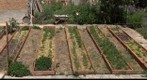 A vegetable garden in Spring