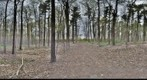 Dairy Bush GigaPan - 89 - May 12 2011