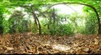 Lamanai Belize -Sampling transect - 110504
